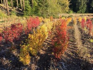 San Juan Native Tree Farm in Autumn Colors