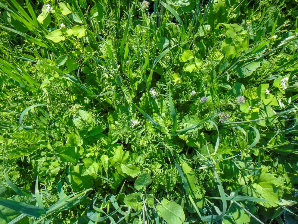 Contrary Science; Cover Crop Mixtures, Monocultures, and Mechanisms